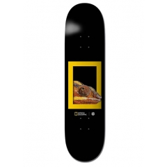 ELEMENT Nat Geo Dragon 8.25''